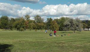 Szkolenie psów na Polu Mokotowskim