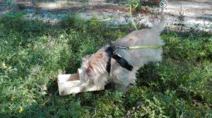 Leniwy pies odpoczywający w krzakach