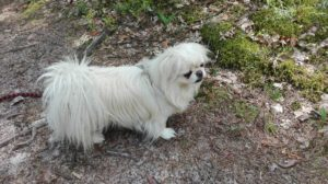 Pies obserwator, który nie lubi się angażować