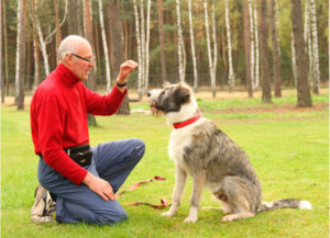 szkolenie behawioralne psa