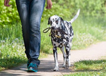 Spacer z psem - chodzenie na luźnej smyczy