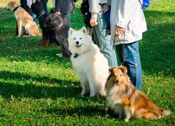 psie przedszkole w Warszawie