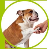 szkolenie psa podaj łapę