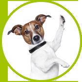 akrobacje psa w psim przedszkolu
