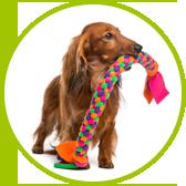 szkolenie psów i bawiący się pies