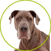 Szkolenia dla psów - psy lękliwe