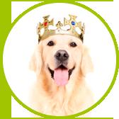 pozytywne szkolenie psów pies z koroną